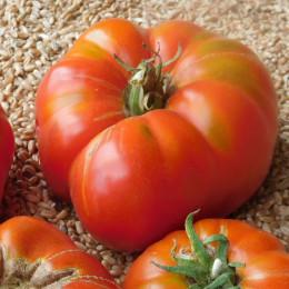 Graines de Tomate Brandywine - 0,2 g